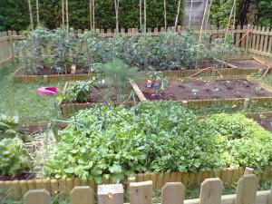legume pe spaţii mici