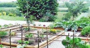 cultivarea dovleceilor în grădină