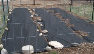 dezinfectarea solului