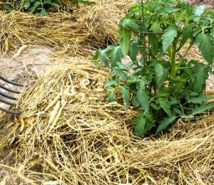 mulcirea solului