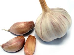 cultivare usturoi