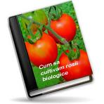 Cum sa cultivam rosii biologice